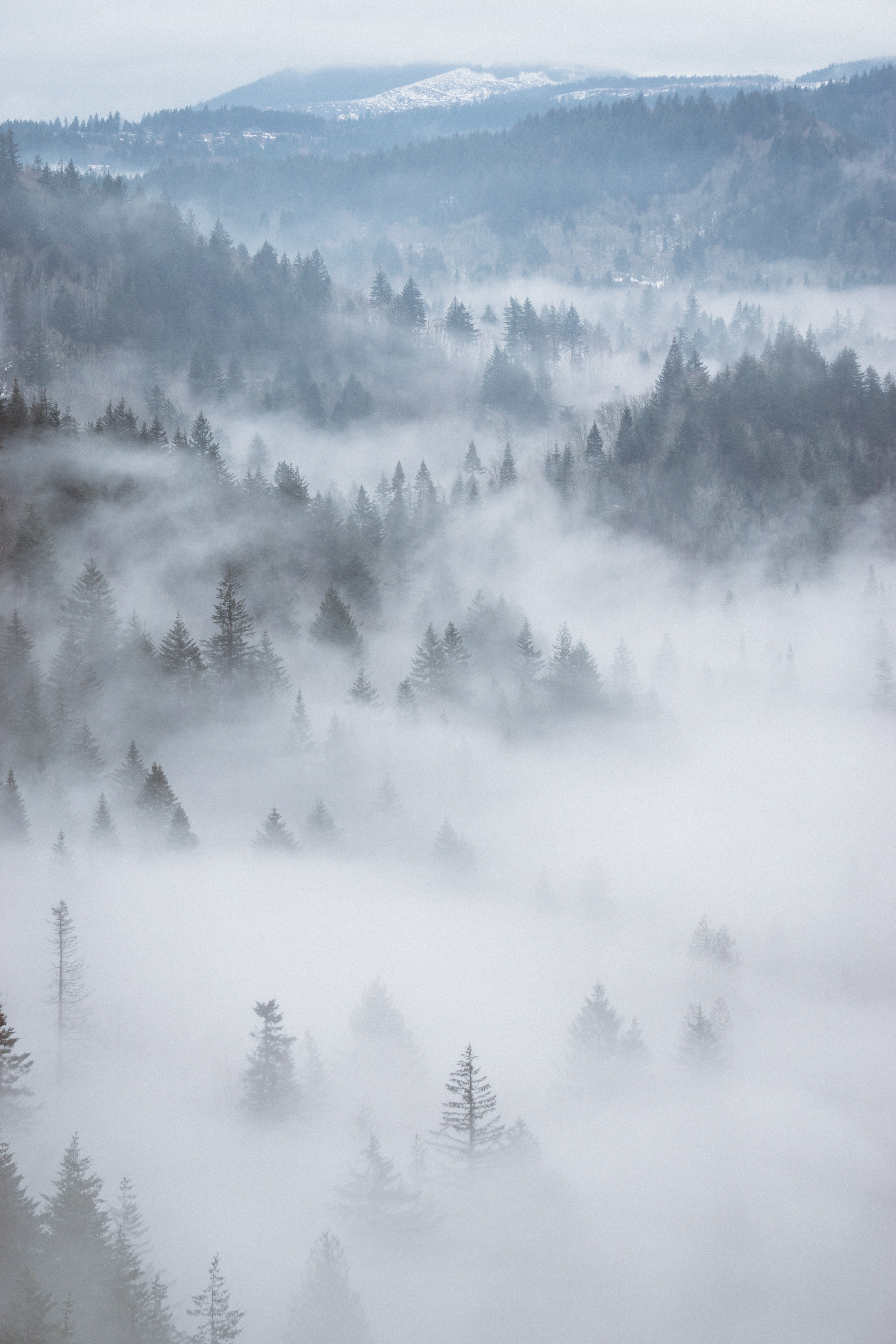 aerial photography of fog-covered forest