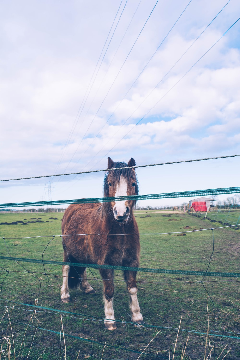 brown and white horse standing beside fence during daytime