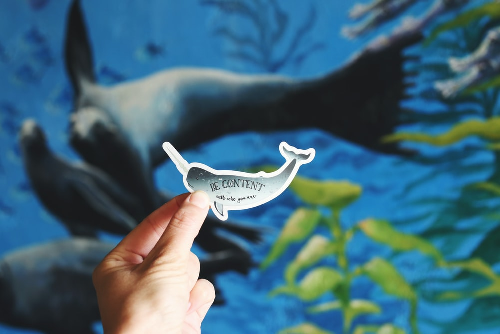person holding whale decal