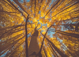 worm's eye view of trees during daytime