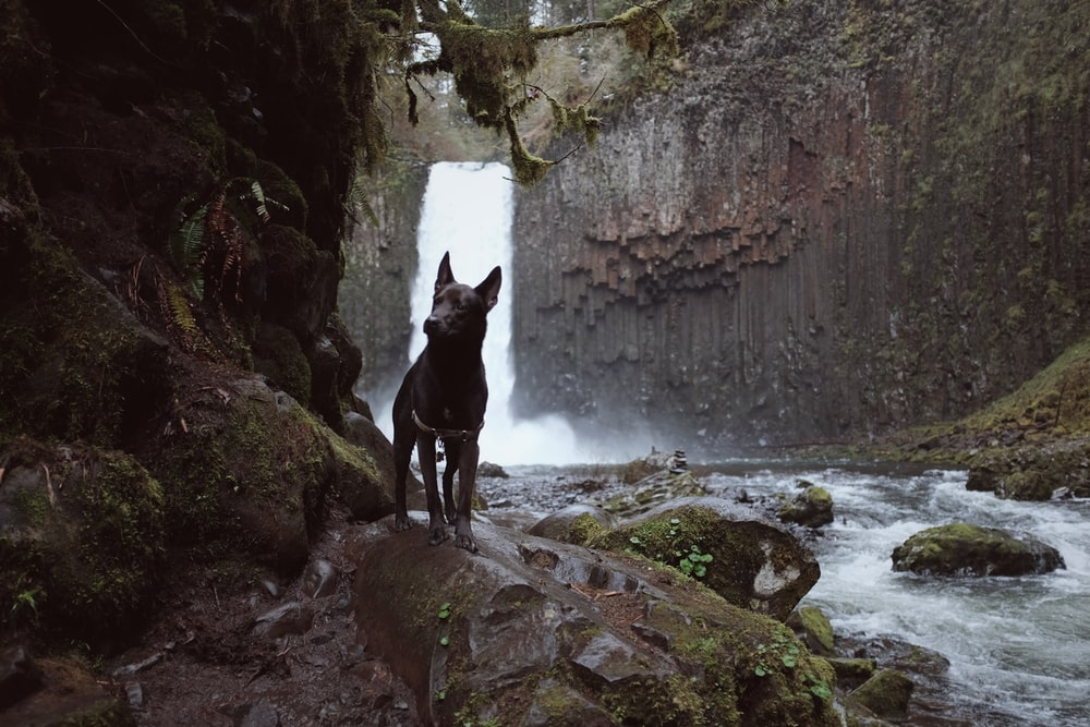 waterfalls behind black dog during daytime