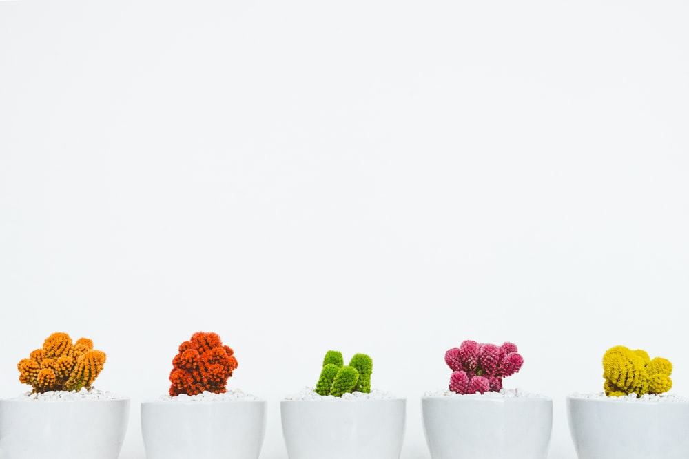 assorted-colored cactus