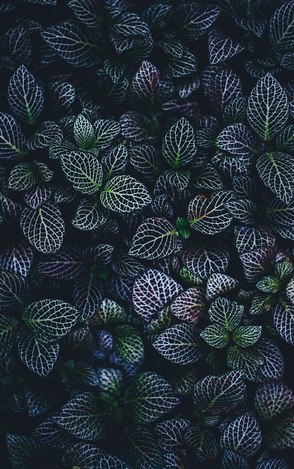 green and blue leaves plants
