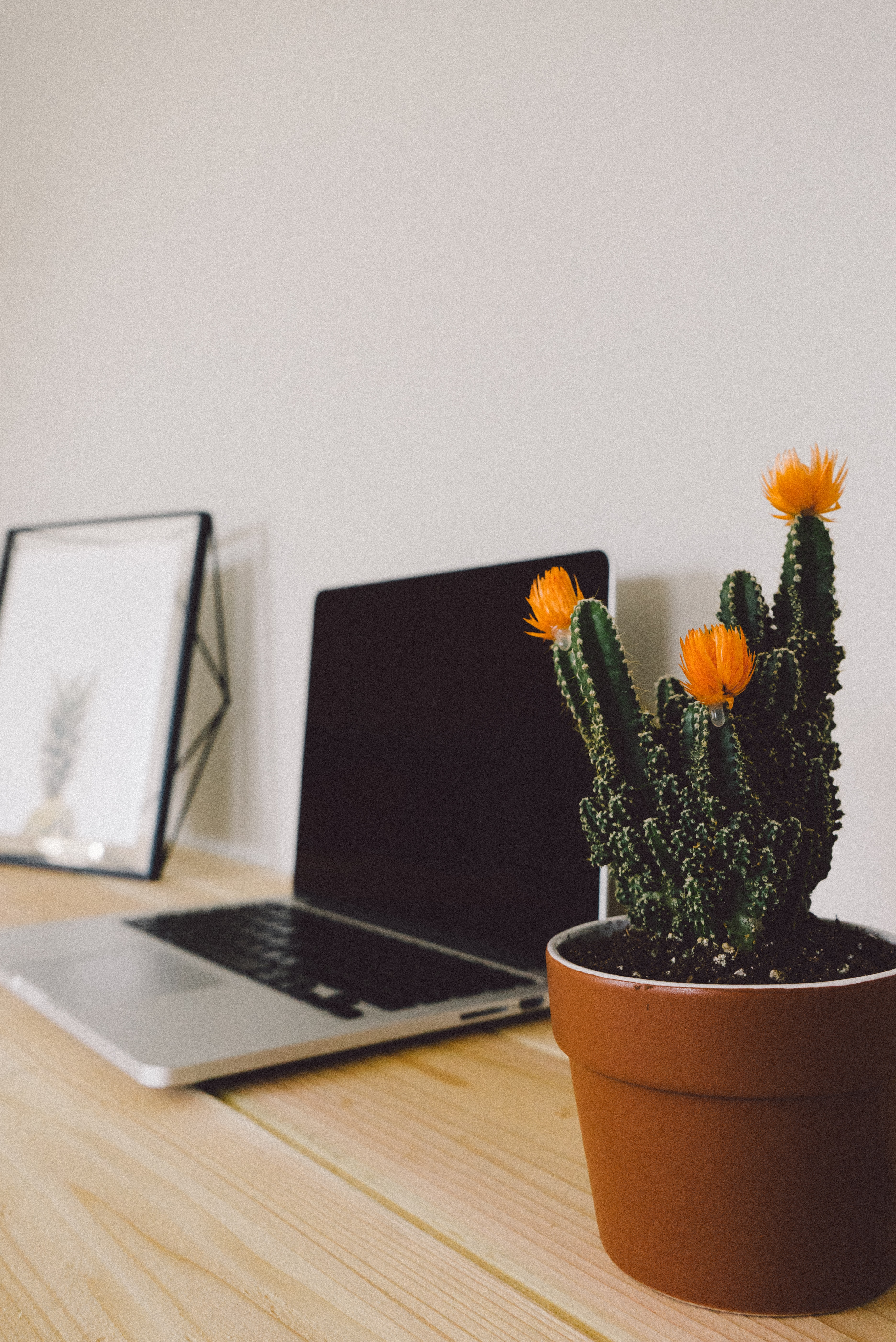 Laptop, artwork and a cactus on a wooden table in perspective