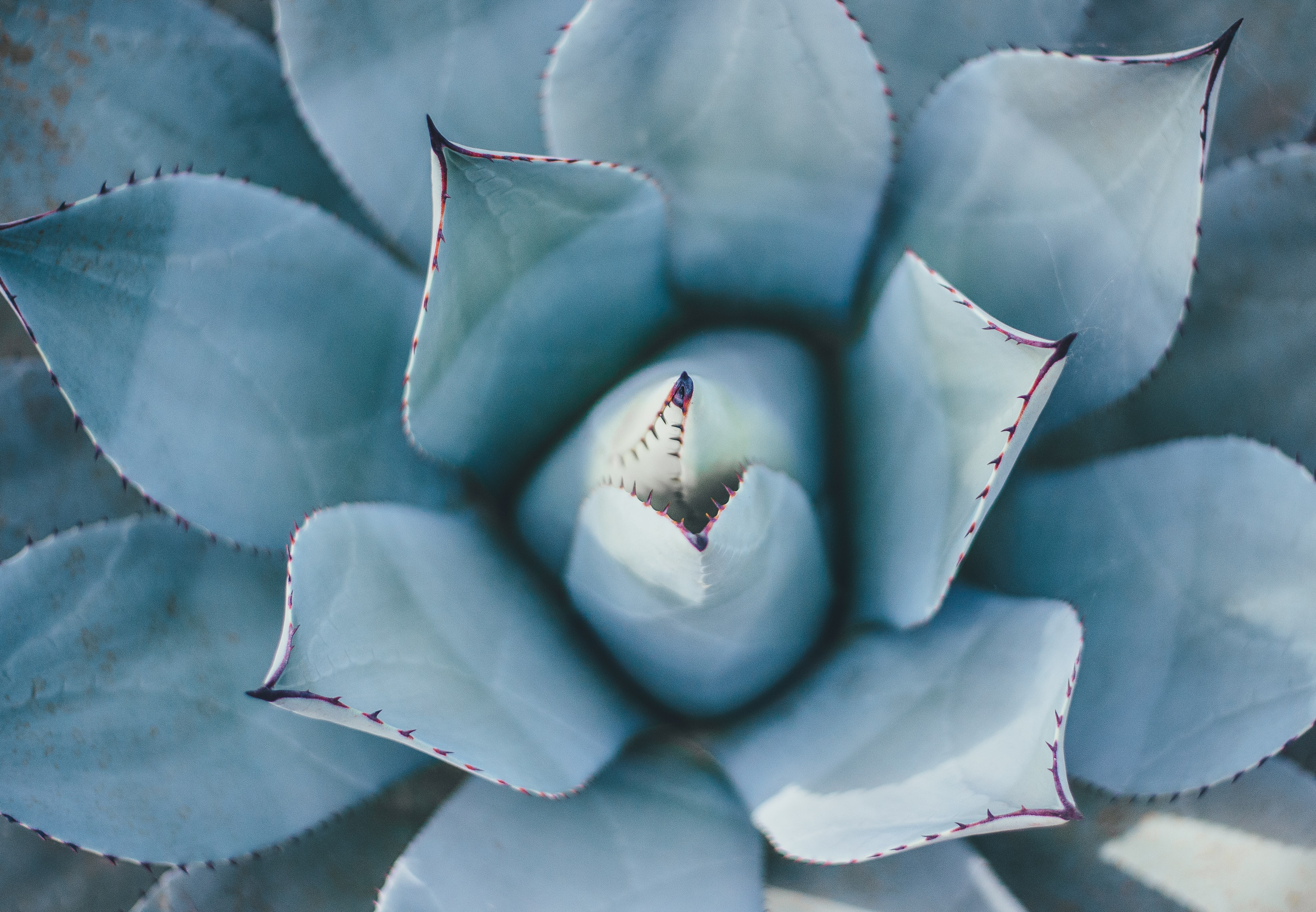 top view of succulent