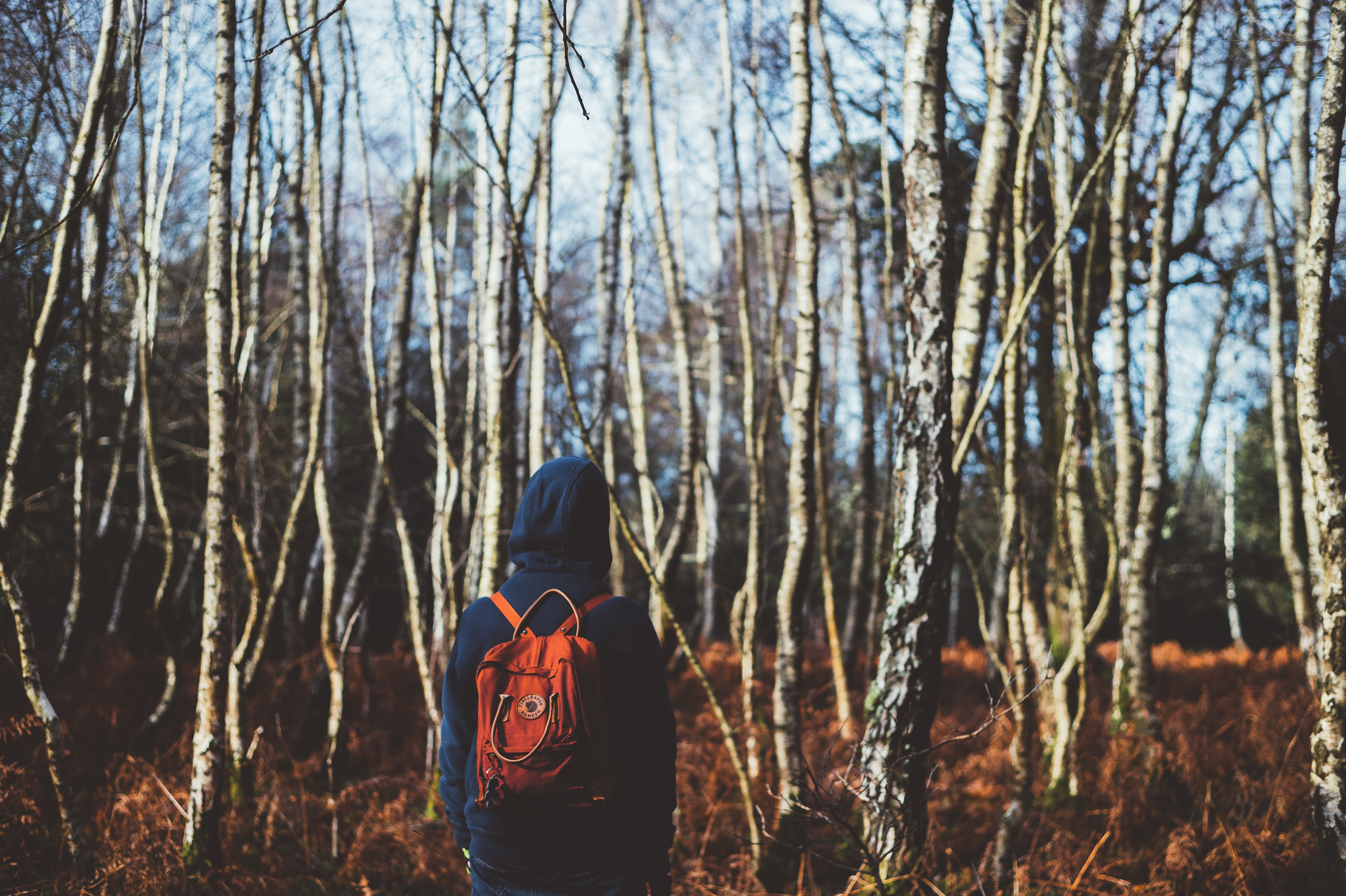 A person with a hoodie and backpack on staring at leafless trees in the winter