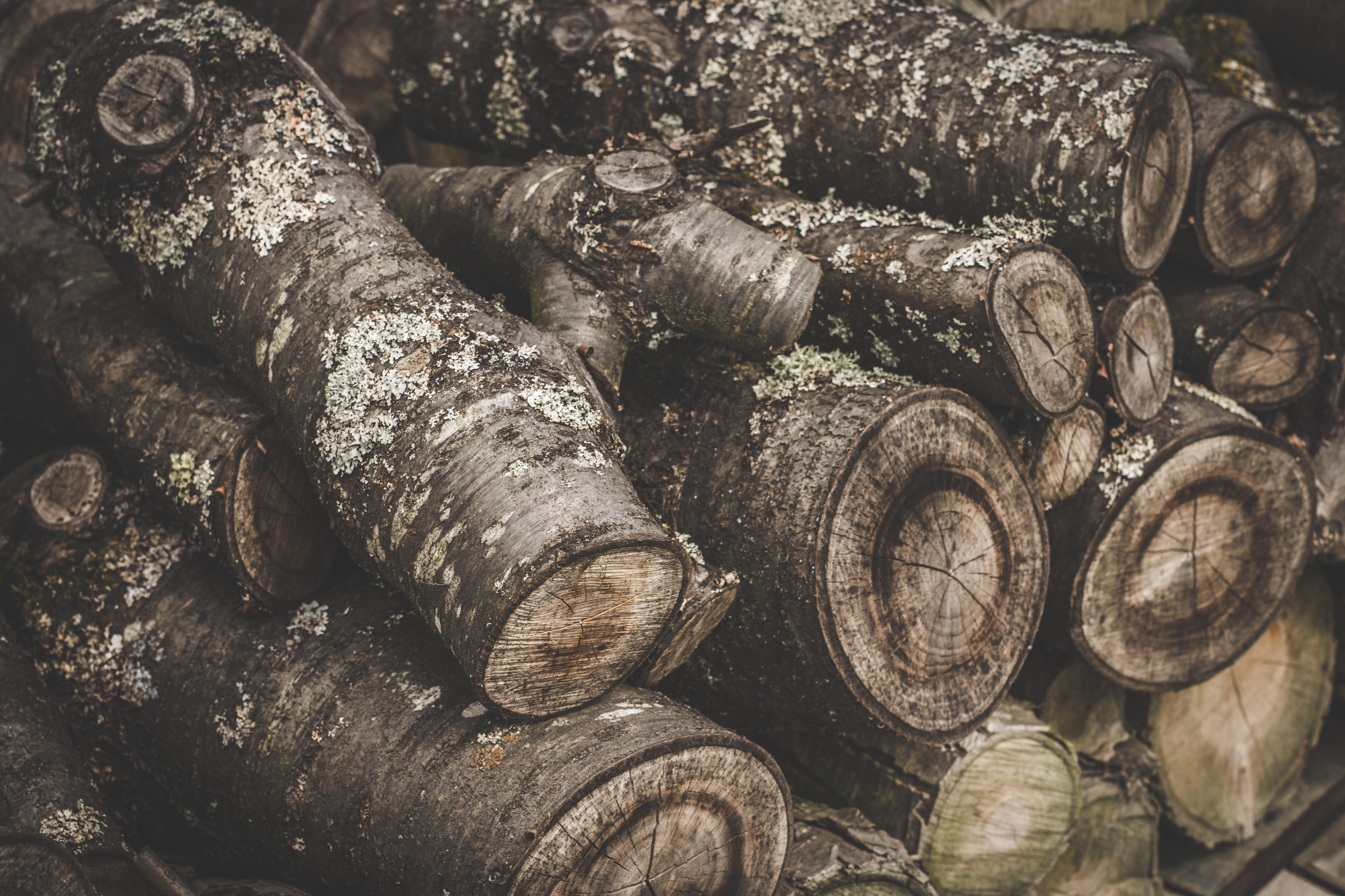 Large mossy logs stacked on top of each other