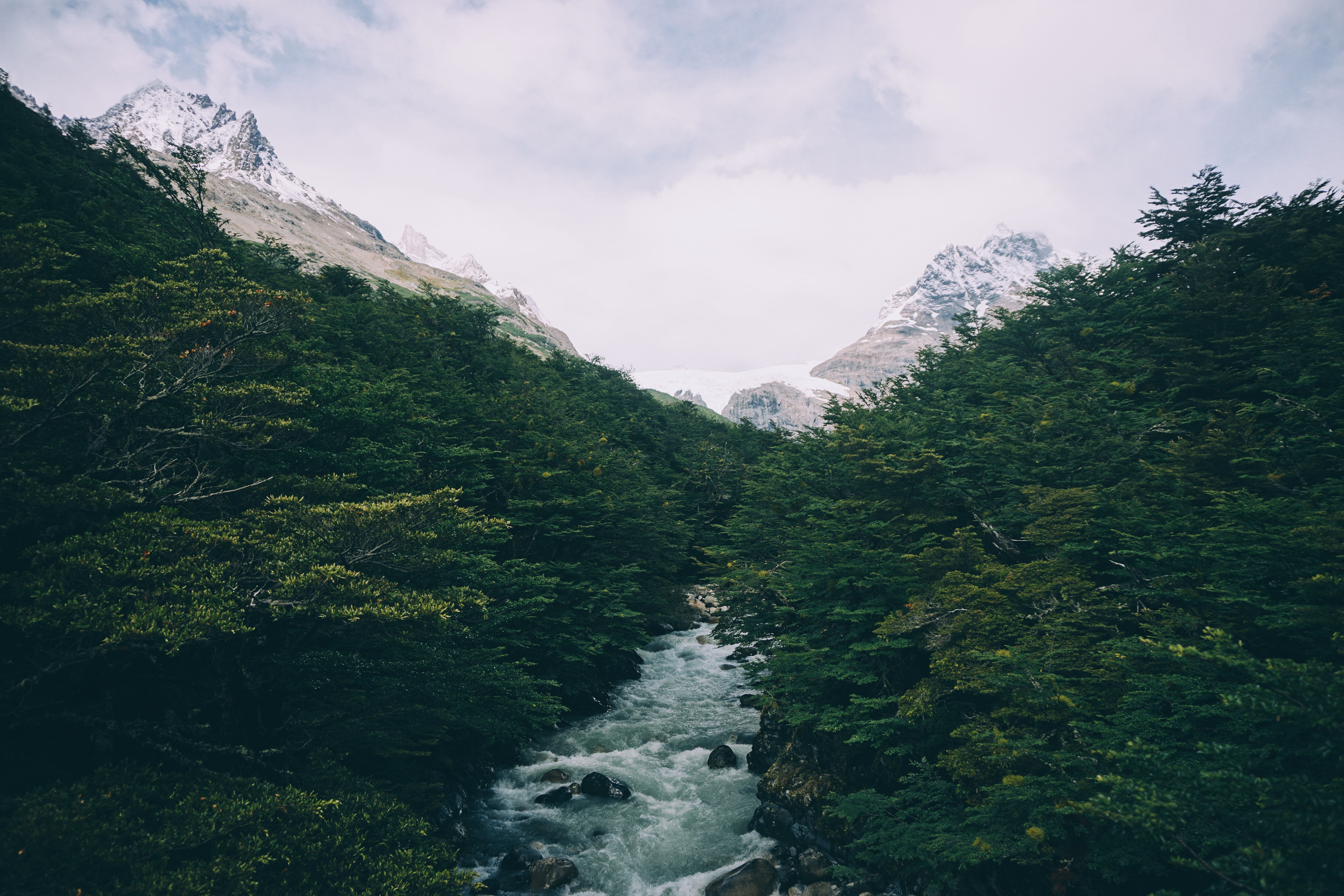 A frothy tree-lined stream in the mountains in Torres del Paine National Park