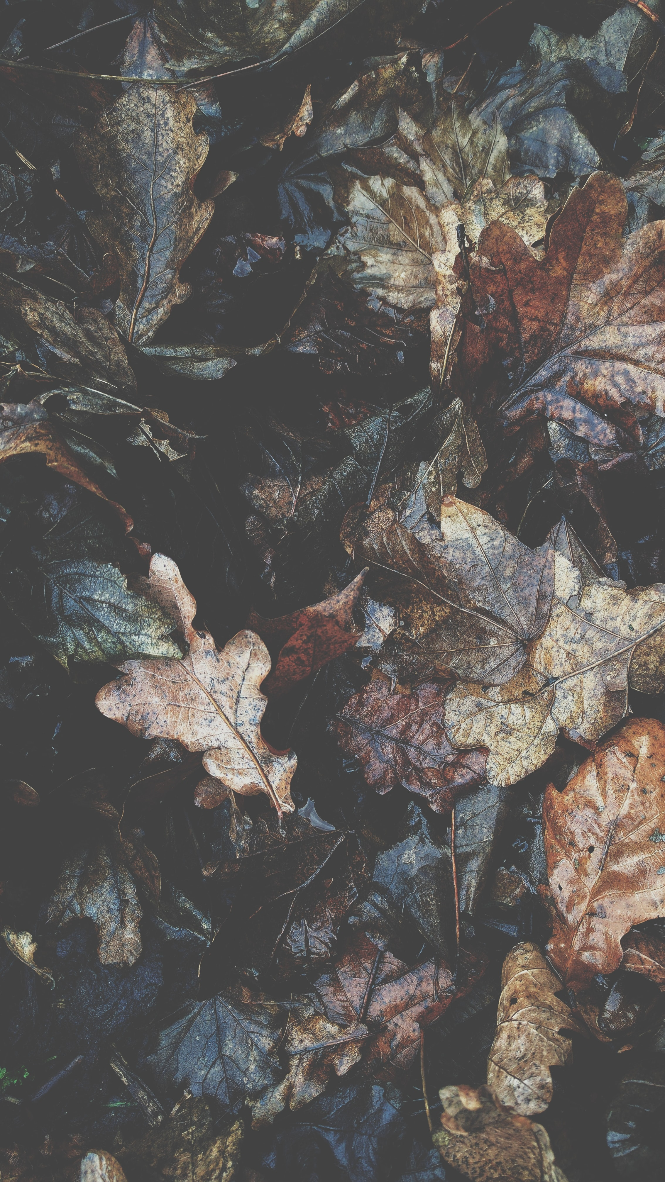 A bunch of autumn leaves.