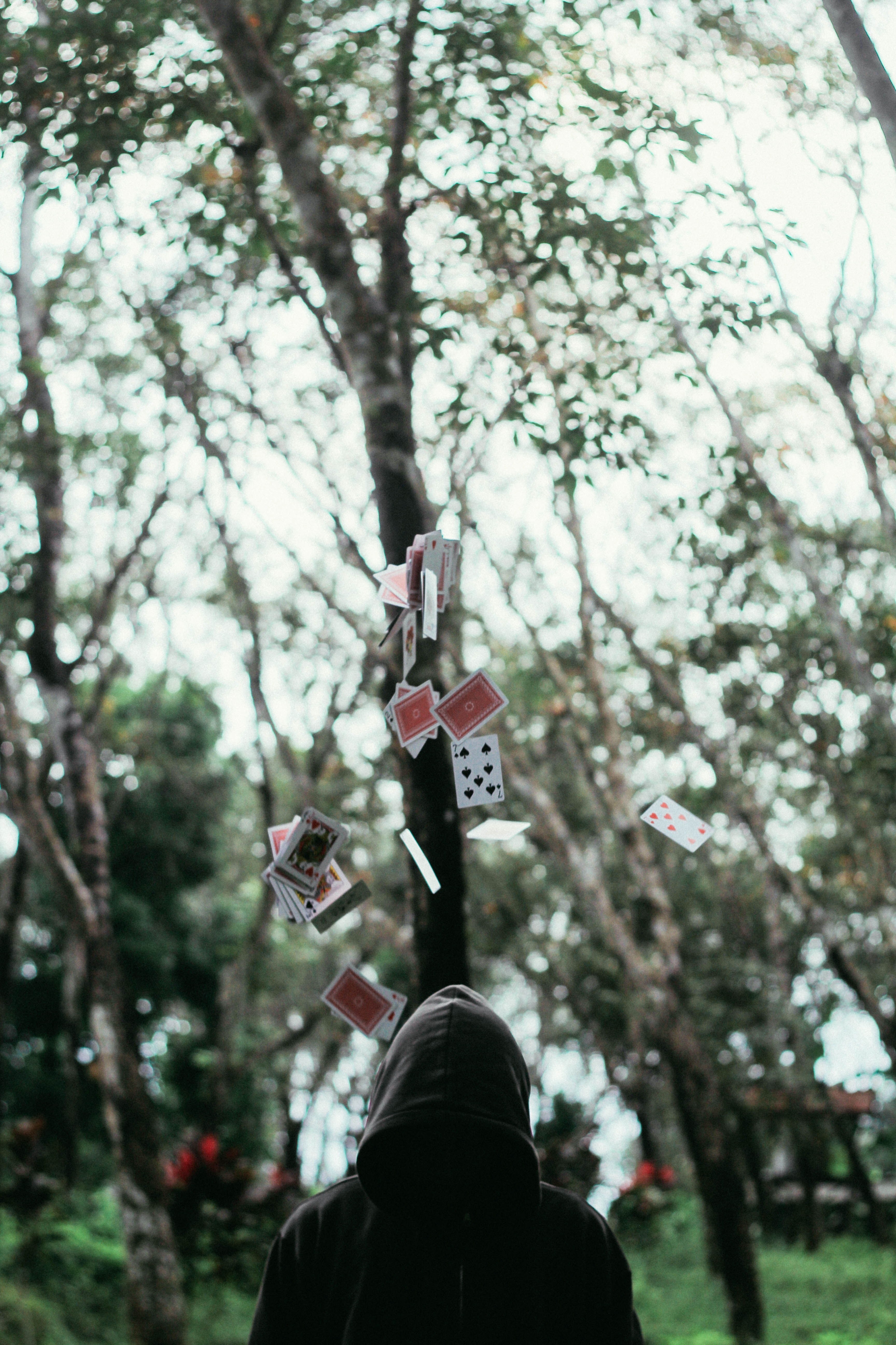 A person near a tree covered in hanging playing cards