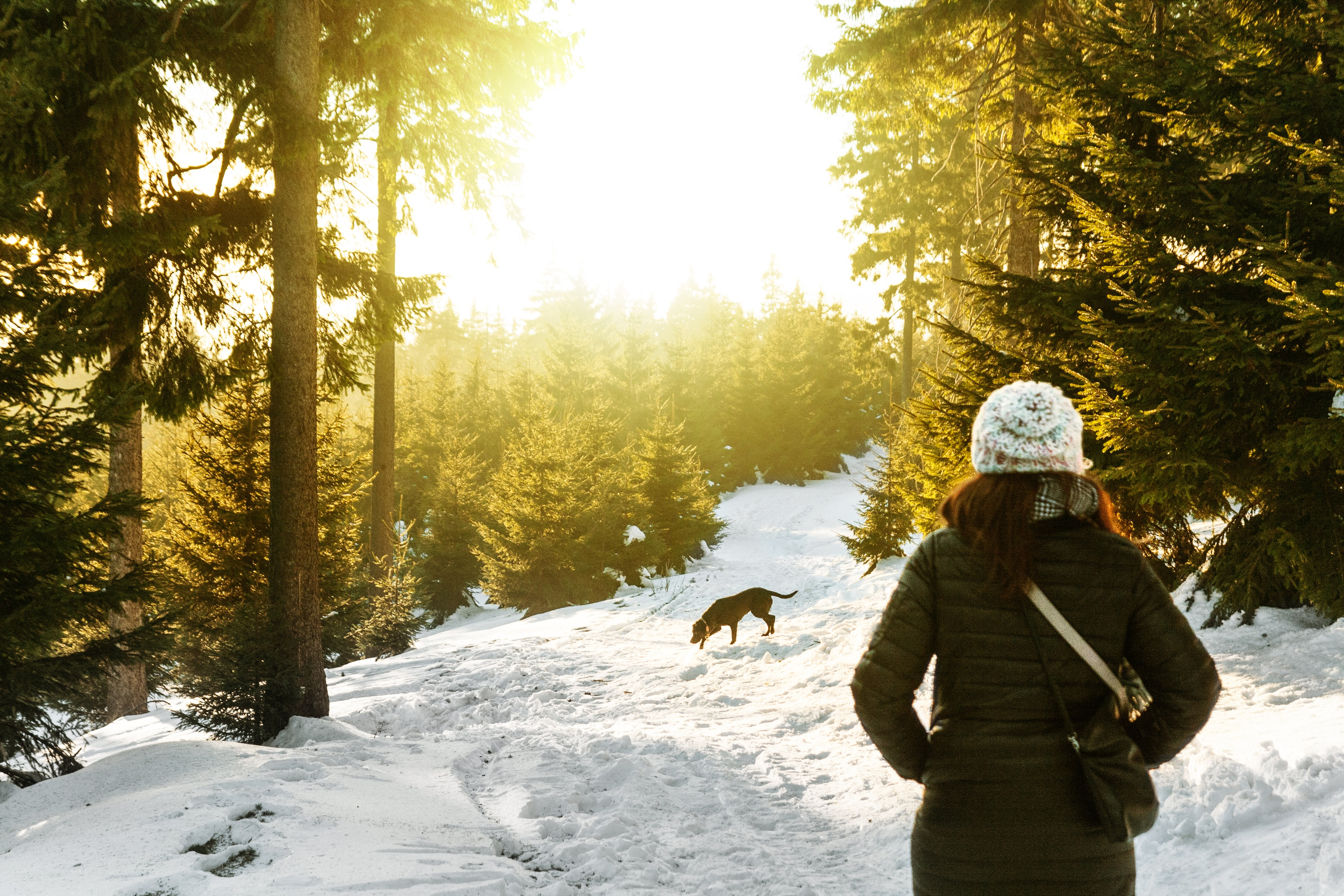 person standing on snow covered forest watching dog
