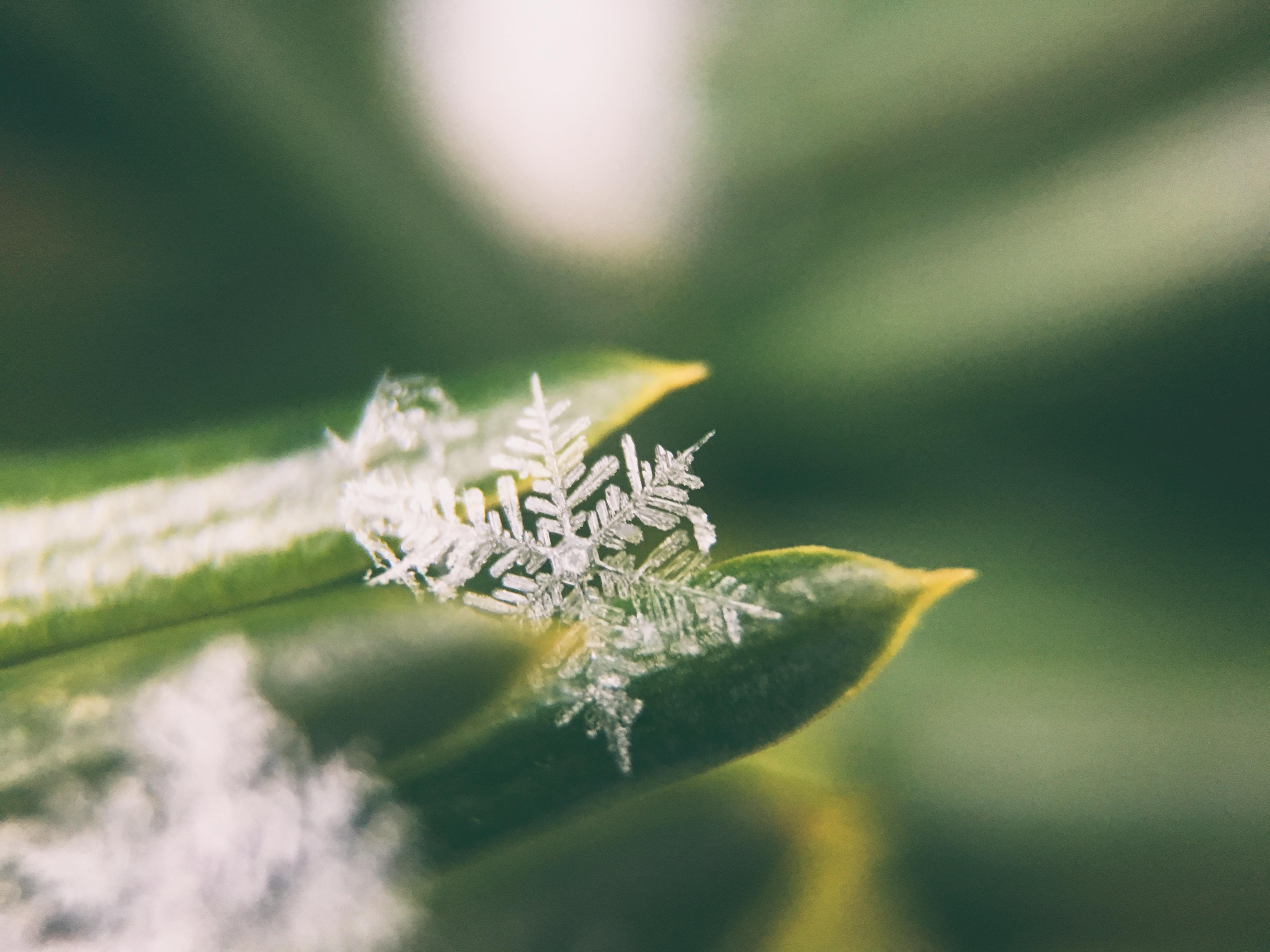 focus photo of snowflakes