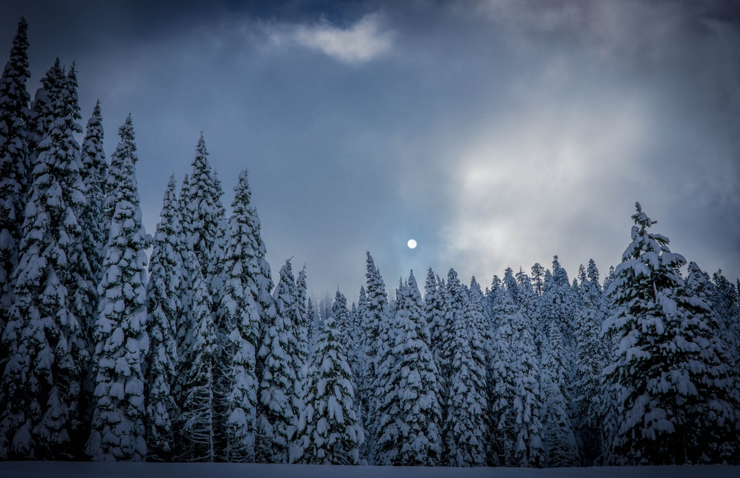 Shot this while on a ski trip at Squaw Valley. Nearing sunset the moon popped out amongst this forest of gigantic pine trees.