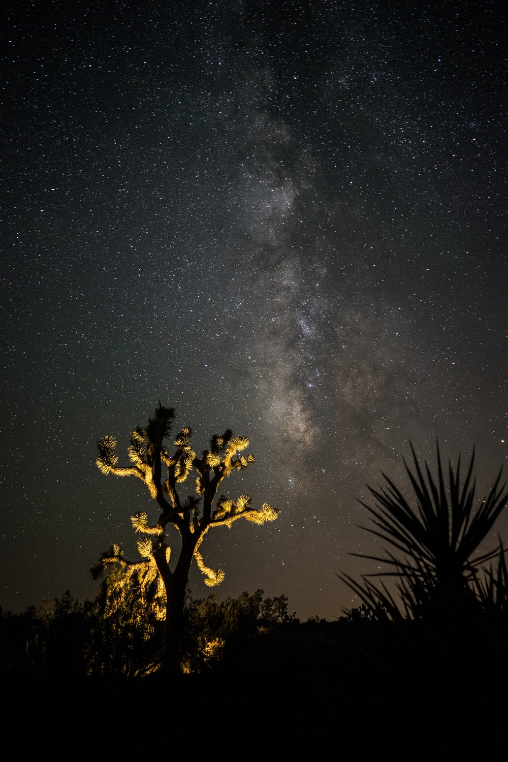 photo of a lighted tree and stars