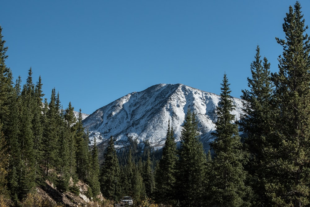 trees in front of glacier mountain