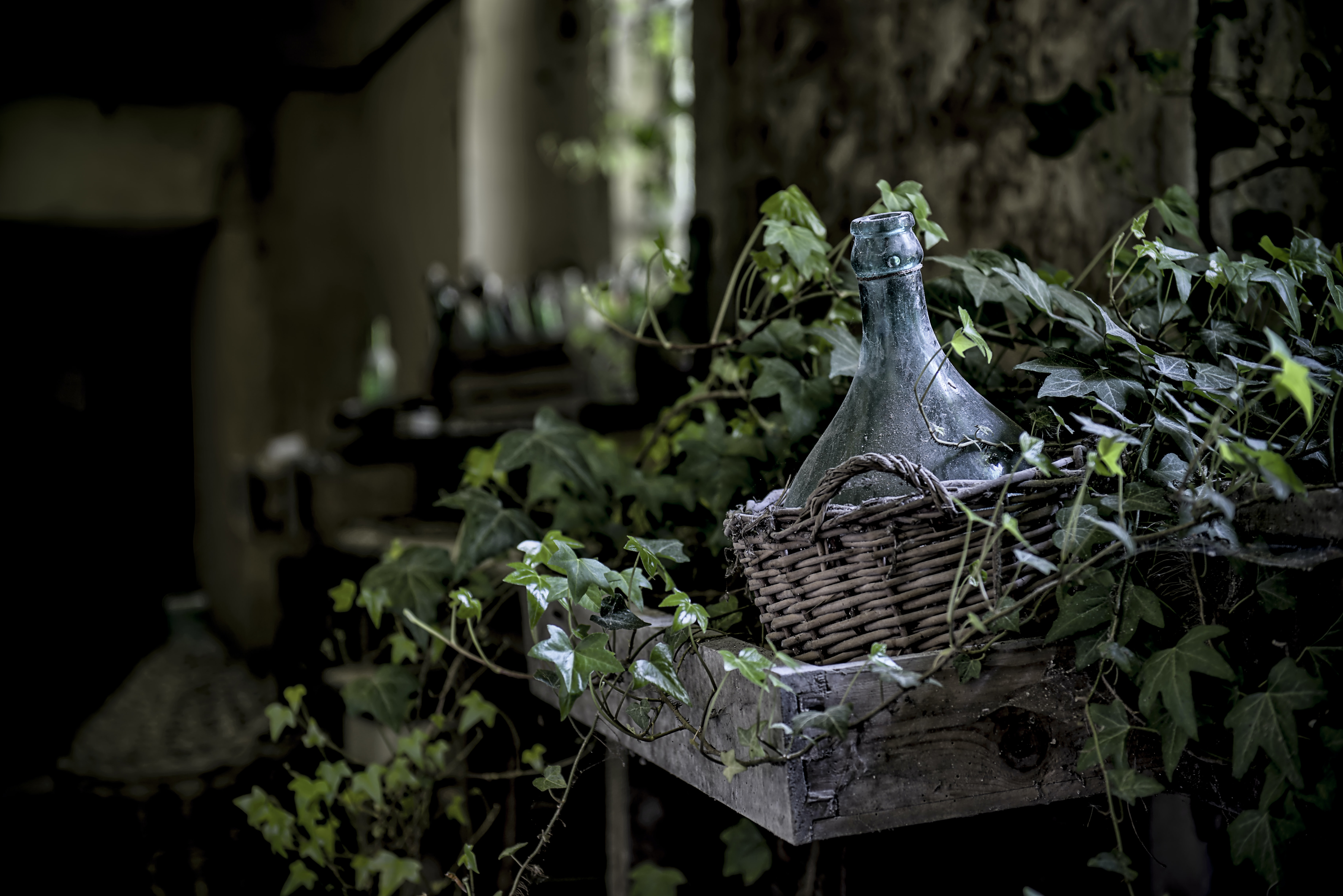 A demijohn surrounded by ivy in a crate hanging from a wall