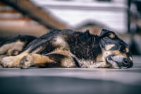 dog leaning on floor