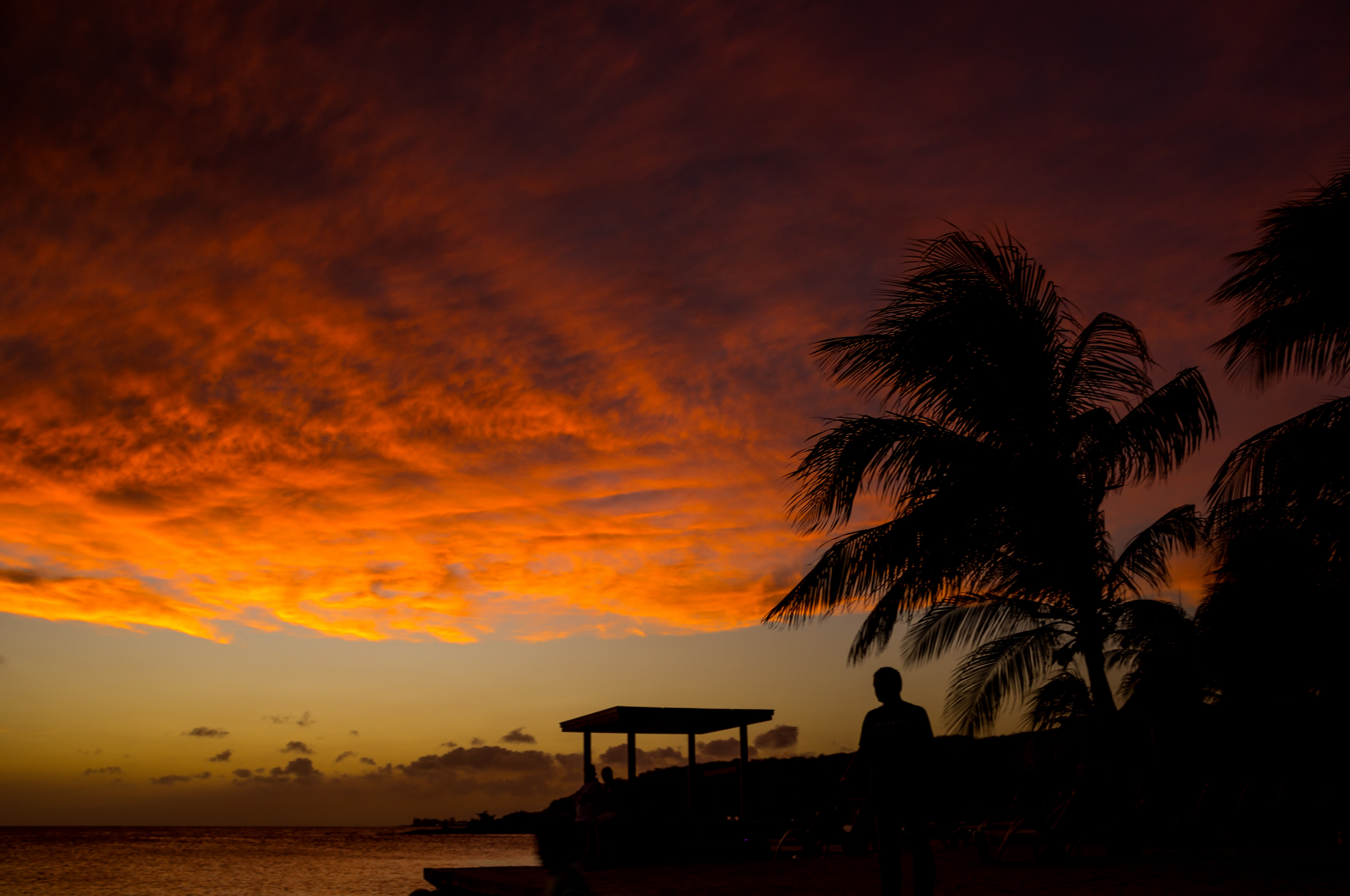 A person next to a palm tree is watching the sunset at the beach in Curaçao