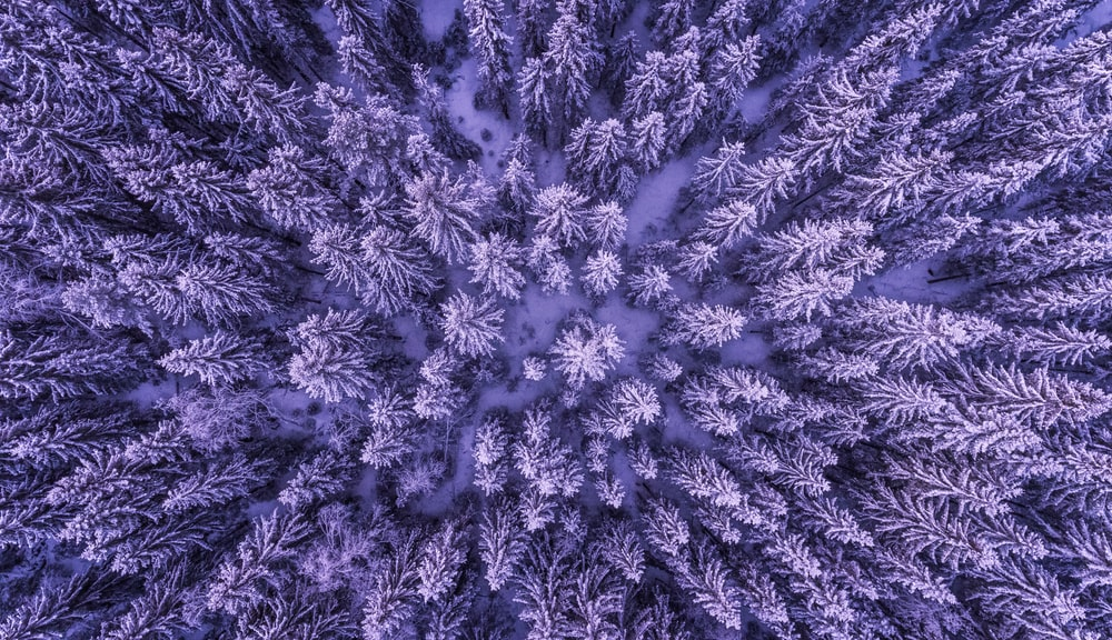 top view of forest on snow ground