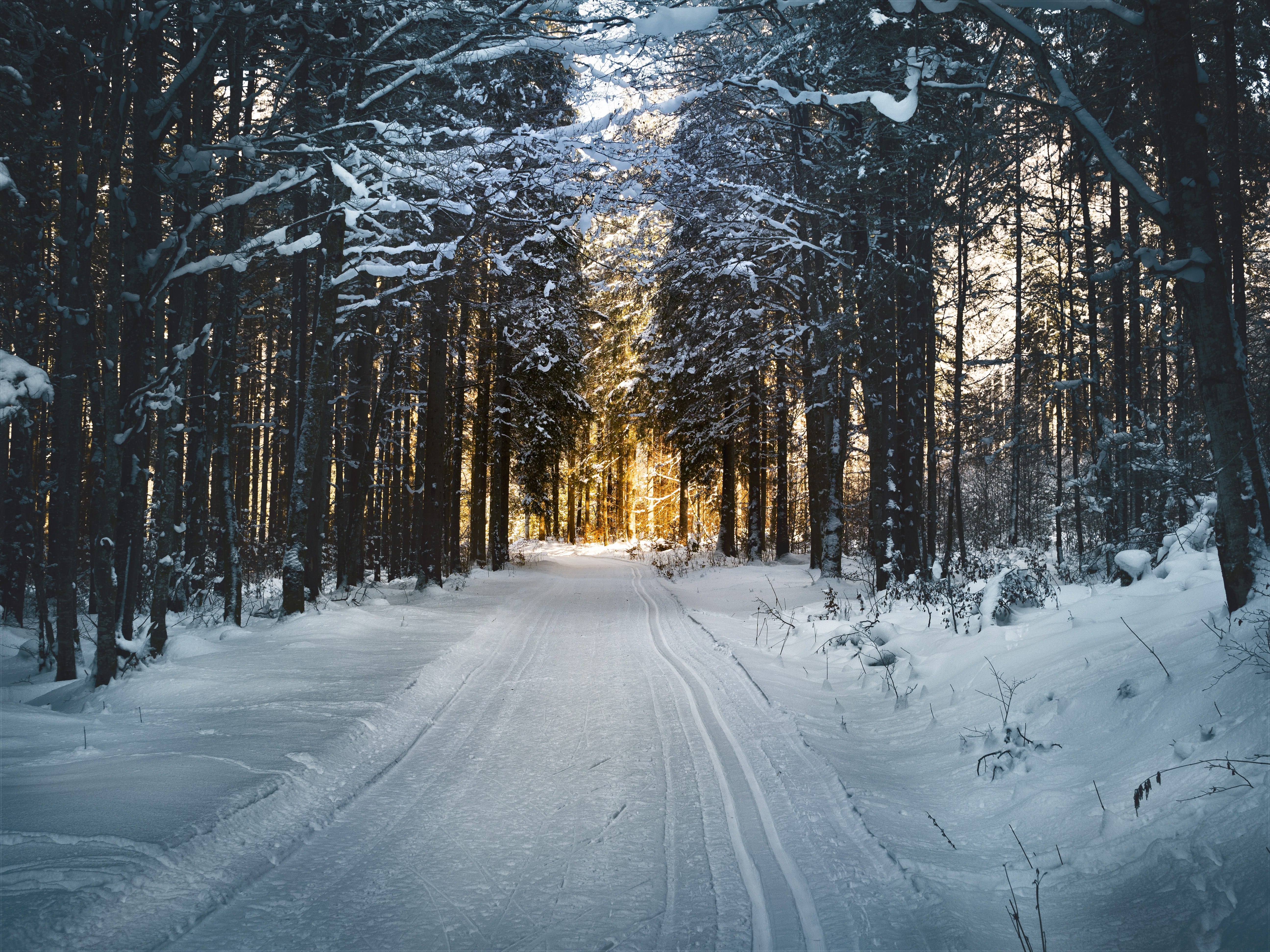 snow-covered trees and road during daytime