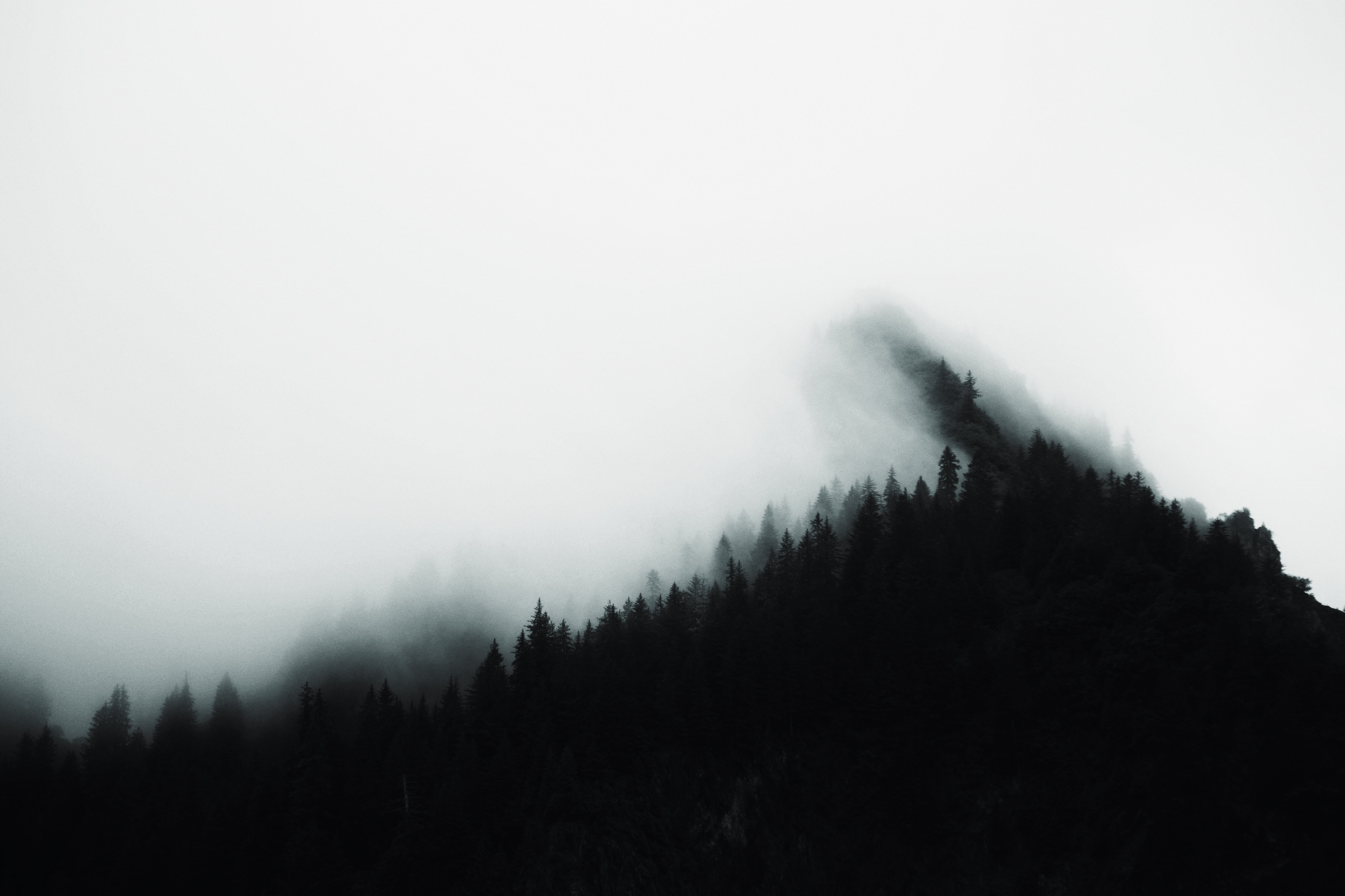 A heavy fog descending on evergreen trees in Kenai Fjords National Park