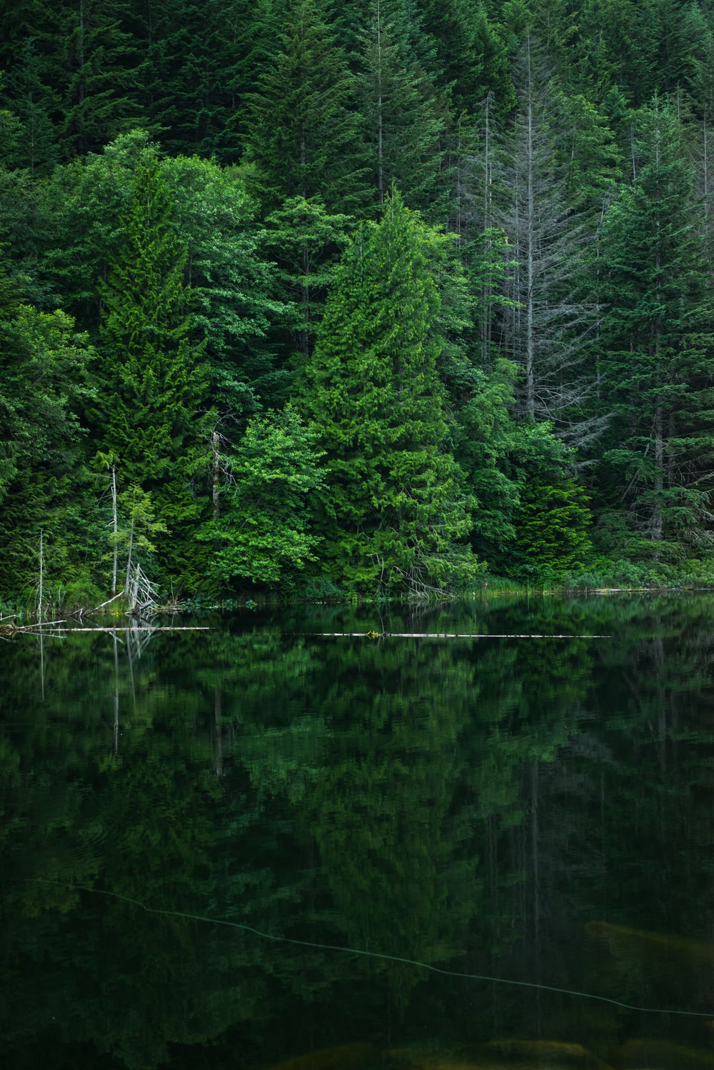 grey calm body of water near green leaf trees at daytime