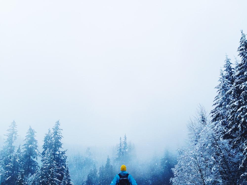 man wearing blue jacket beside pine trees during daytime