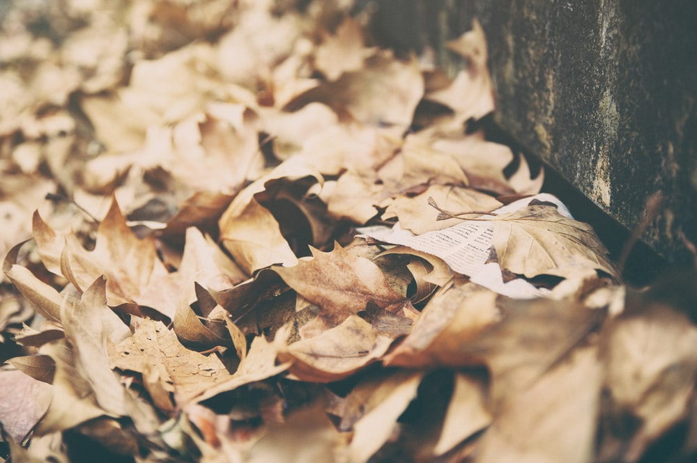 closeup photo of dried leaves