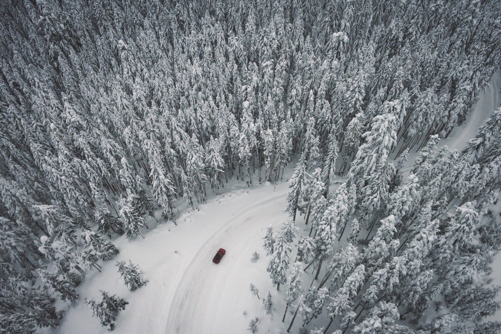 vehicle speeding on road covered in snow surrounded by trees at daytime