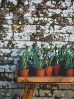Tips for a Single Container Garden