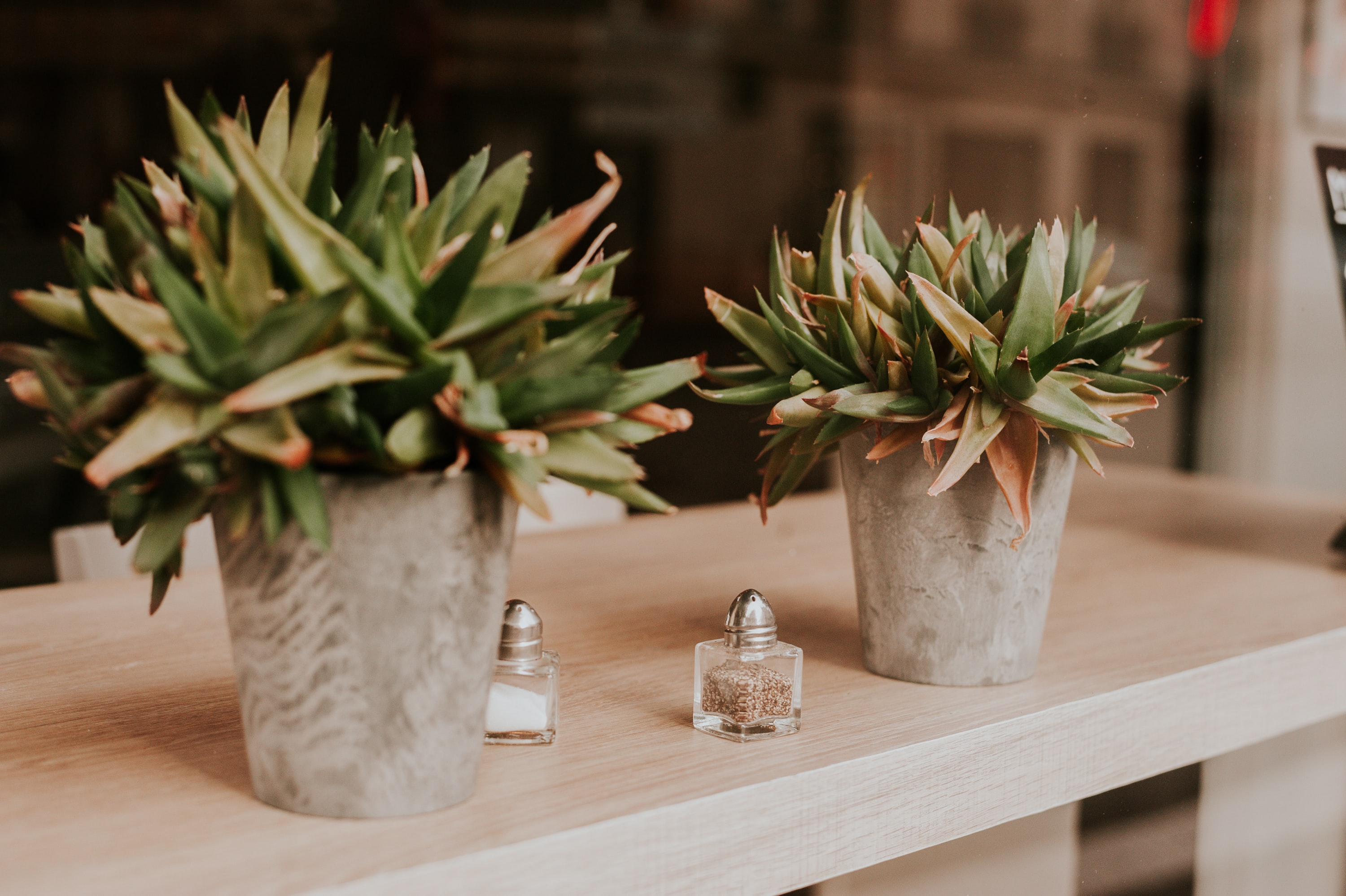 Two potted plants sitting on a wooden shelf with a salt and pepper shaker