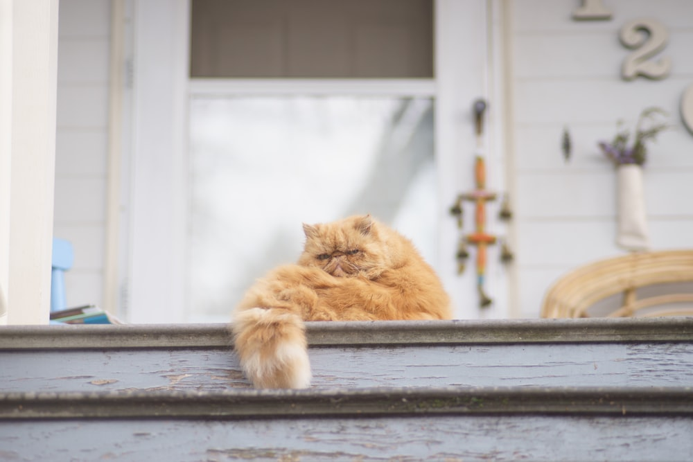 brown tabby cat sitting on gray wooden floor near white house at daytime