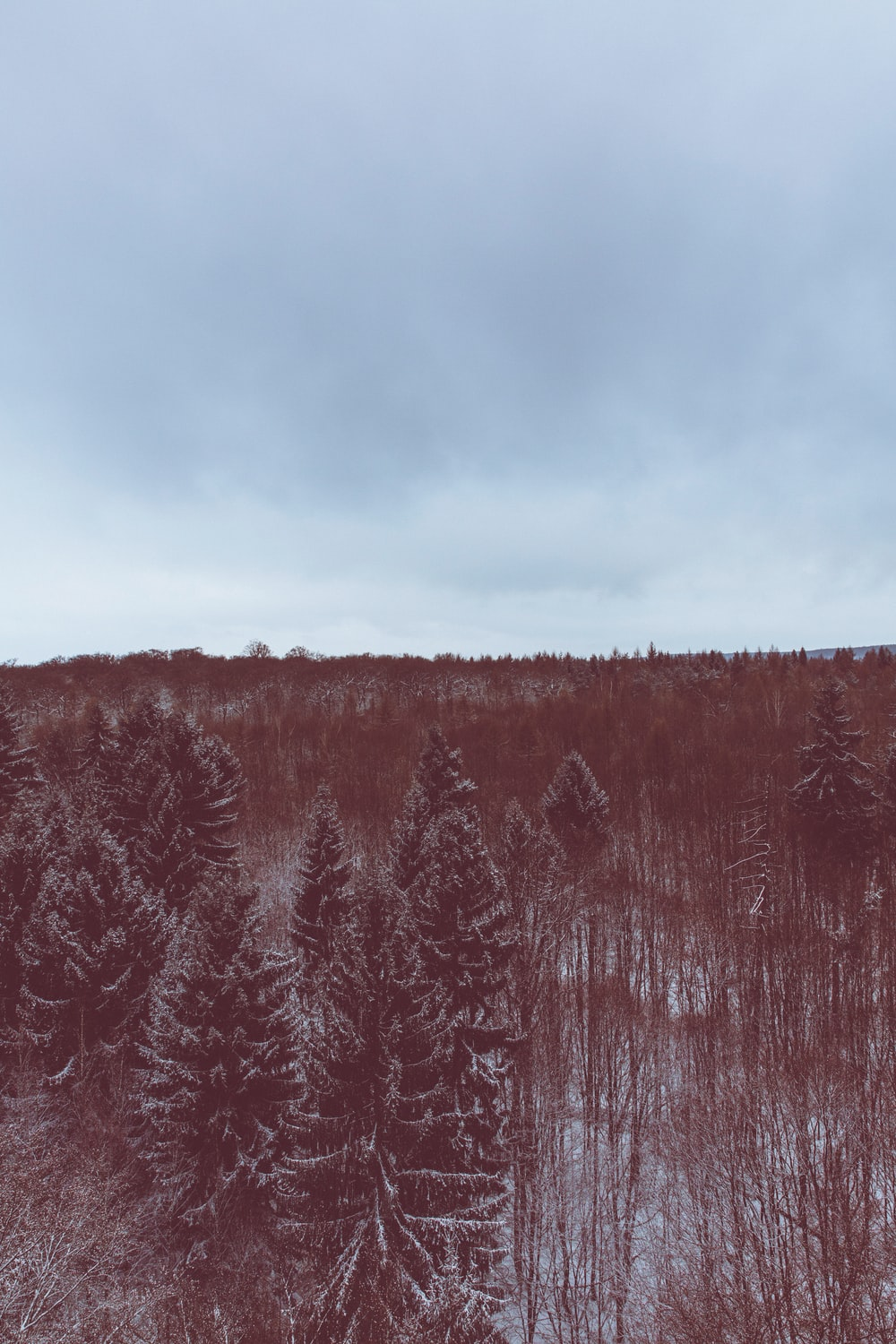 A red-hued shot of an evergreen forest under snow
