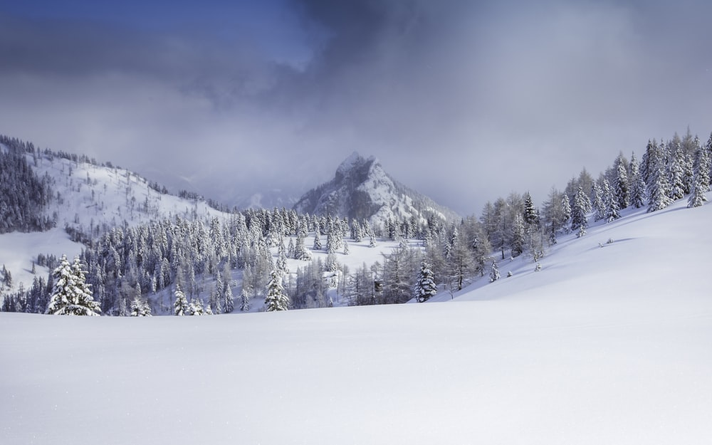 snowy hill and trees at daytime