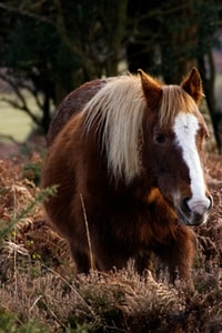 brown and white horse walking outdoor during daytime