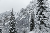 snow-covered tall trees at daytime