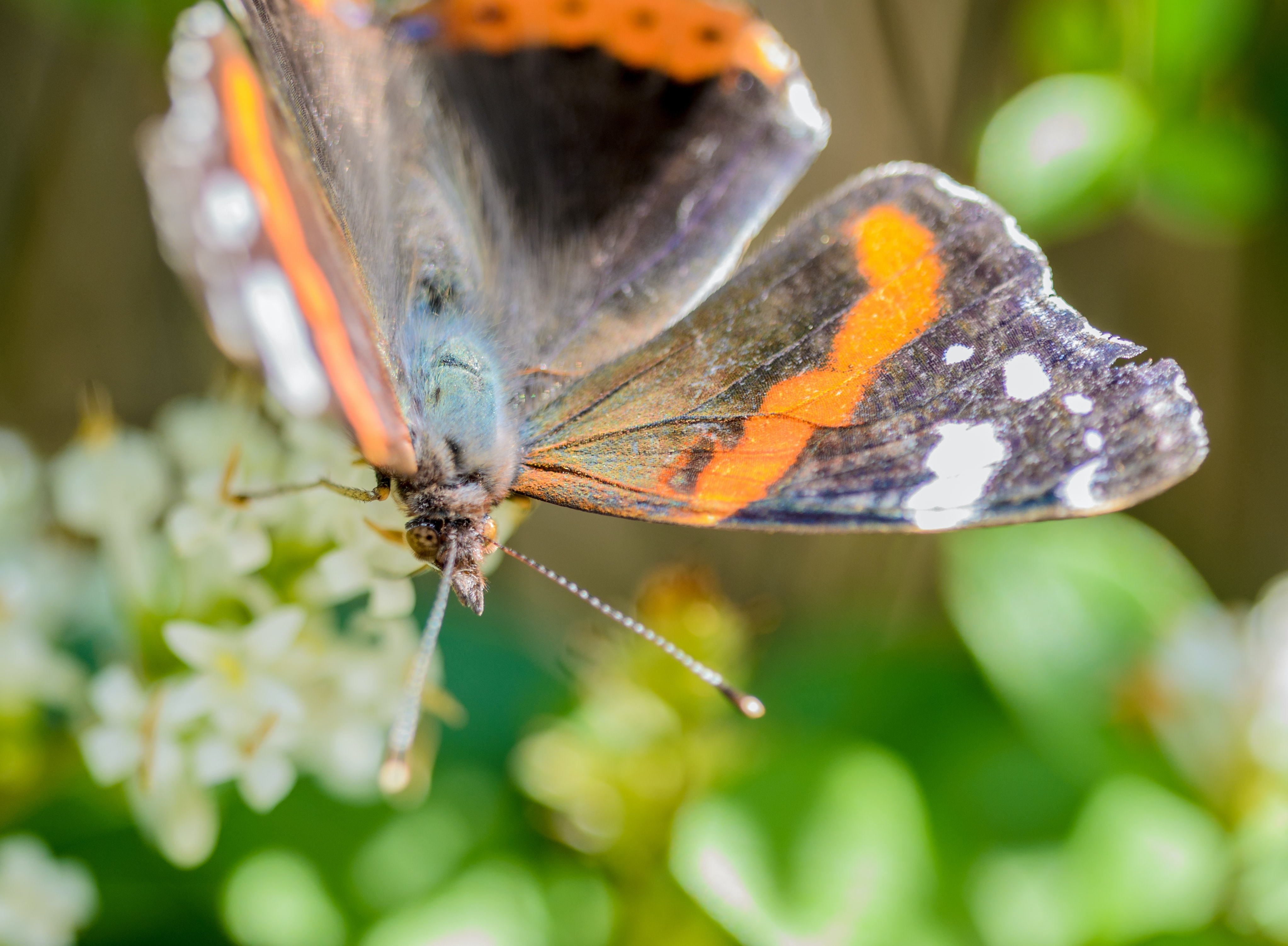 Blurred shot of a butterfly in a garden.