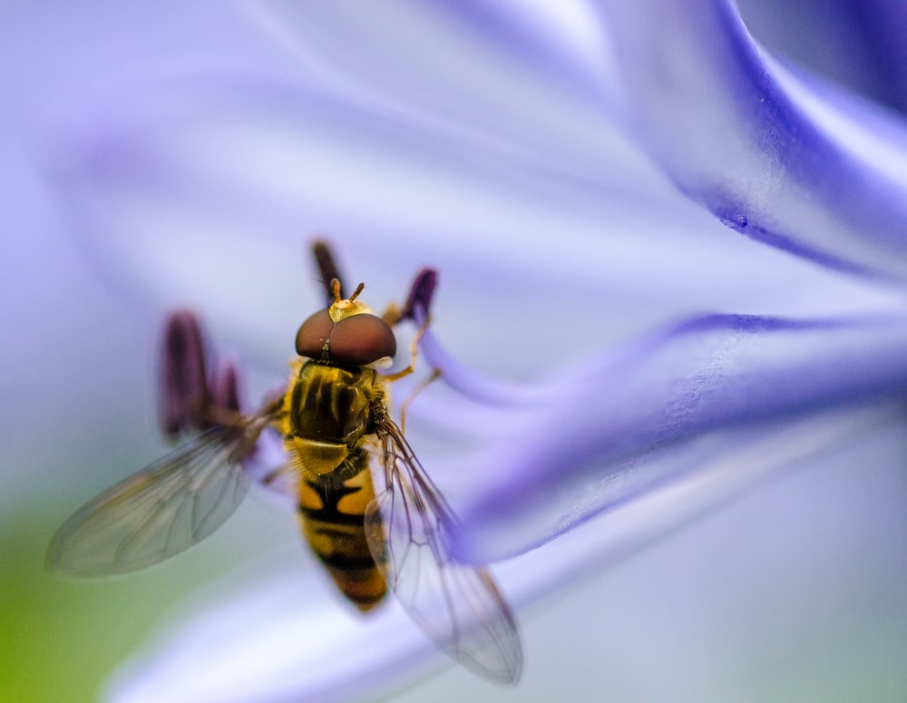 micro photography of brown and black fly on purple petaled flower