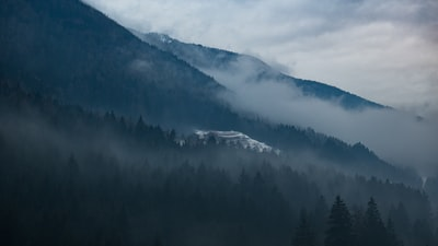 trees on side of mountain covered with fog at daytime moody teams background