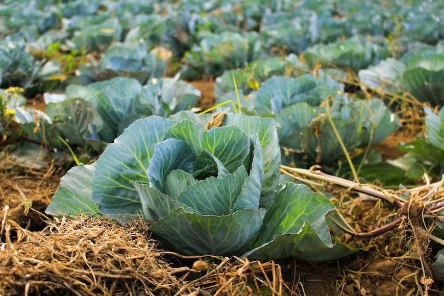 Cara Sukses di Bidang Pertanian