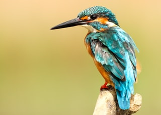 blue and brown bird on brown tree trunk