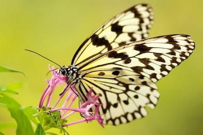 Butterfly enjoying sweet nectar