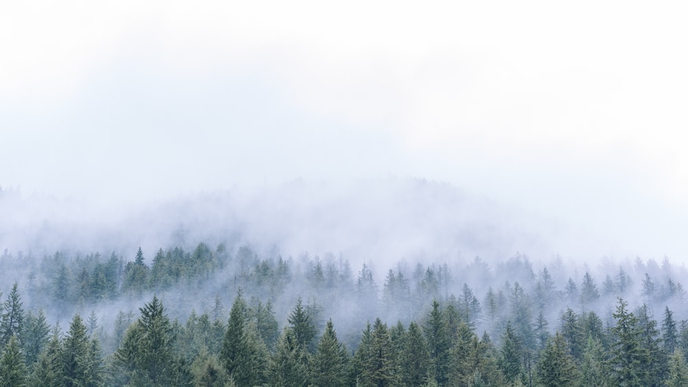 aerial photo of trees in front of mountain