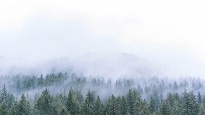 1279. Ködös tájakon