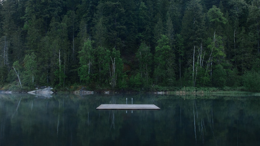 white wooden dock surrounded by water