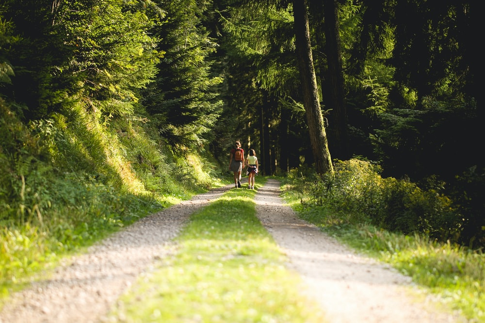 two person walking on pathway in between trees at daytime