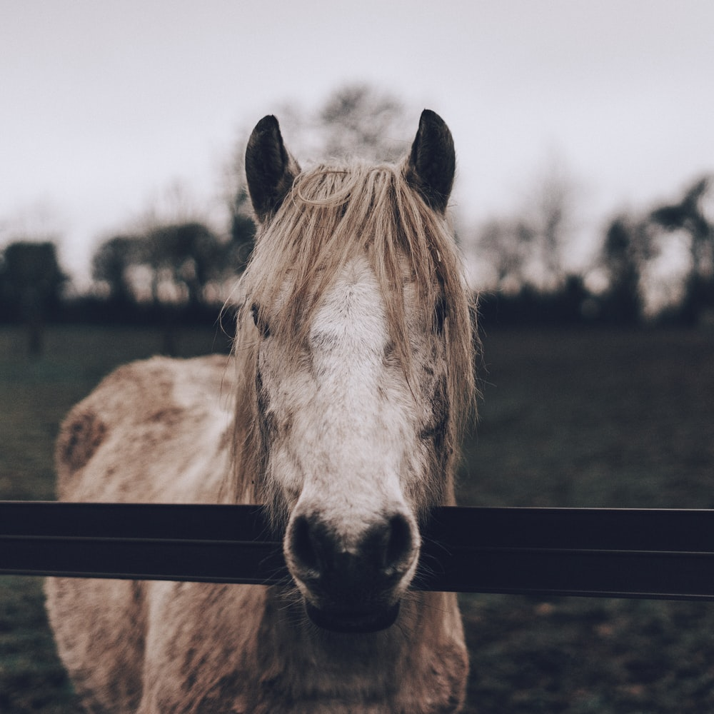 brown and white horse on grass