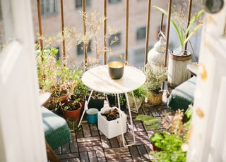 garden on terrace during daytime