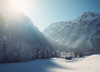 snowy mountain surrounded with trees