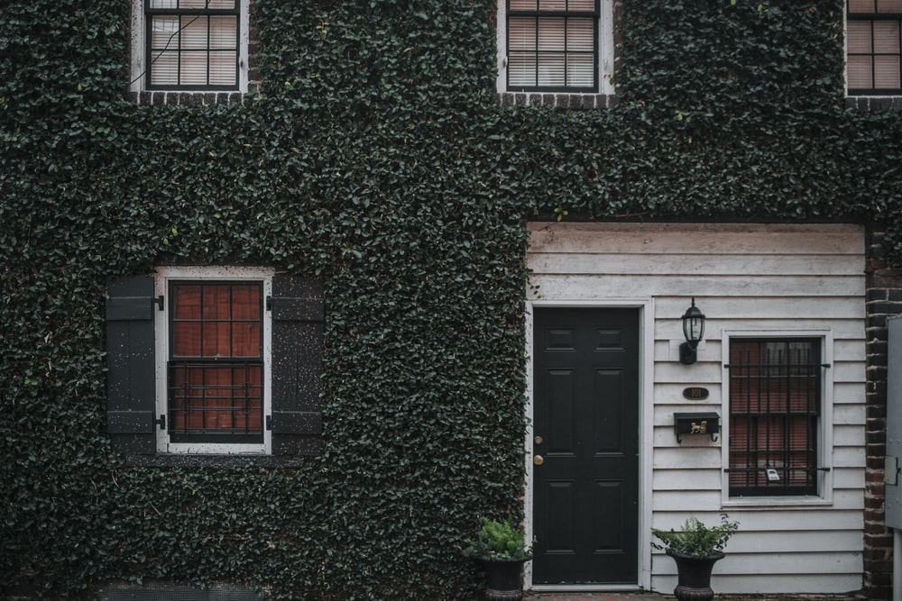 photo of house with green leafed covered wall